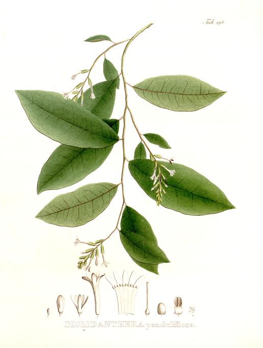 plantes soin